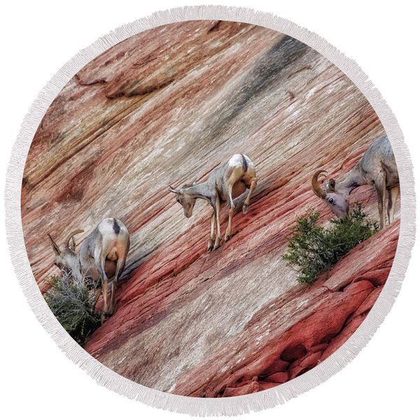 Nimble Mountain Goats 5694 Round Beach Towel