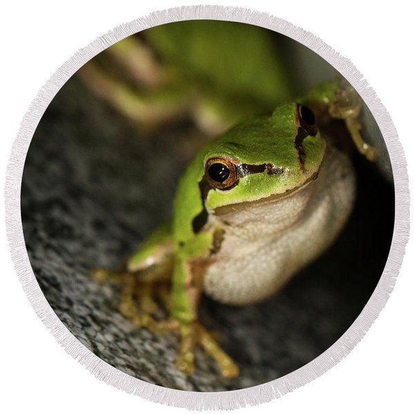 Pacific Tree Frog Stare Round Beach Towel