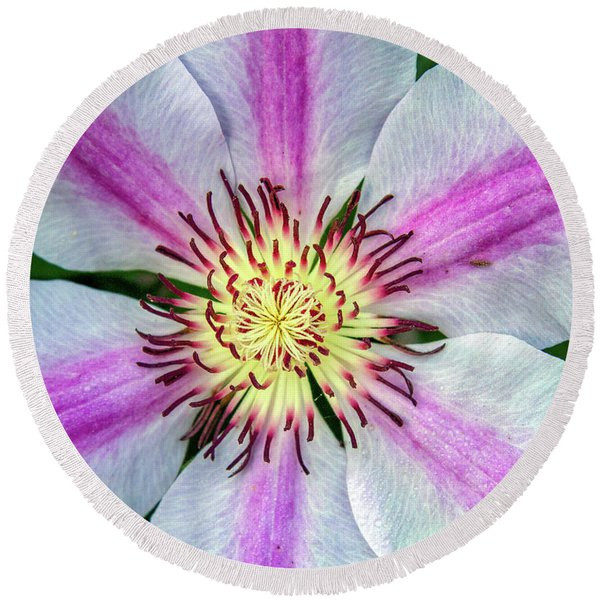 Pink Striped Clematis Close Up Round Beach Towel