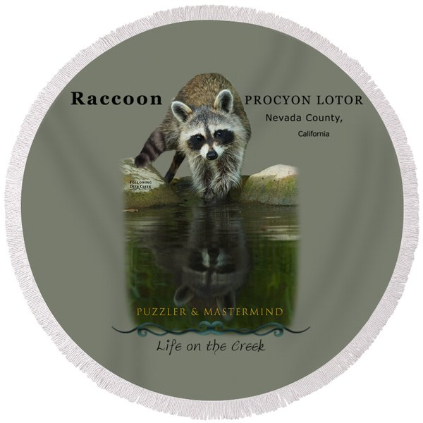 Raccoon Puzzler And Mastermind Round Beach Towel