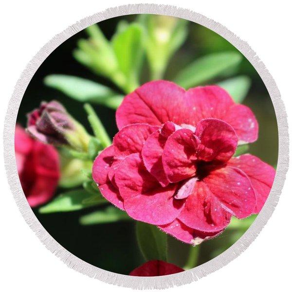 Scarlet Geranium In Cape May Round Beach Towel