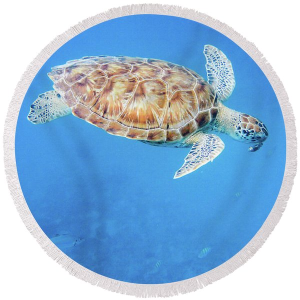 Sea Turtle And Fish Swimming Round Beach Towel
