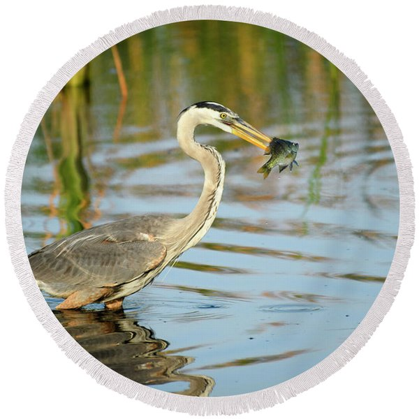 Snack Time For Blue Heron Round Beach Towel