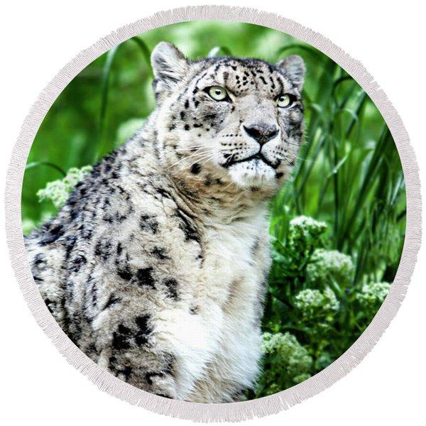 Snow Leopard, Leopard Art, Animal Decor, Nursery Decor, Game Room Decor,  Round Beach Towel