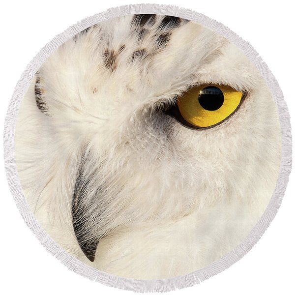 Snow Owl Eye Round Beach Towel