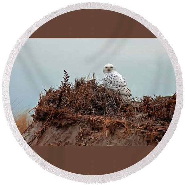 Snowy Owl In The Dunes Round Beach Towel