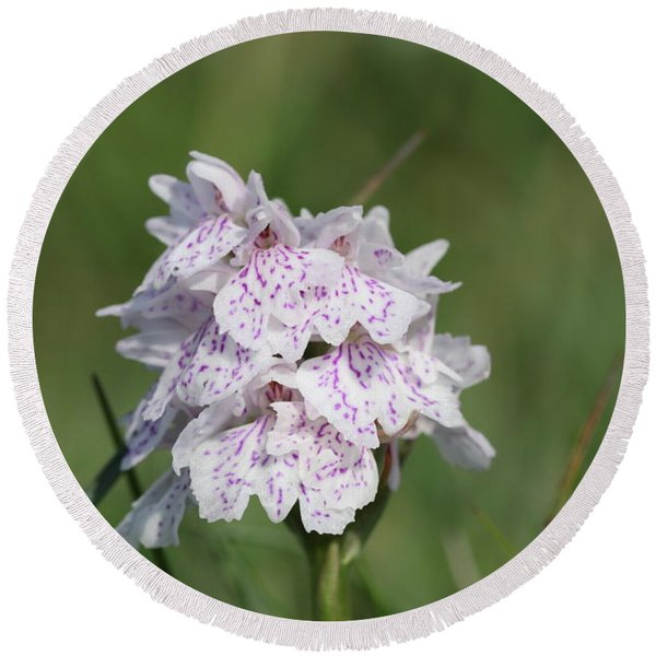 Spotted Heath Orchid Round Beach Towel