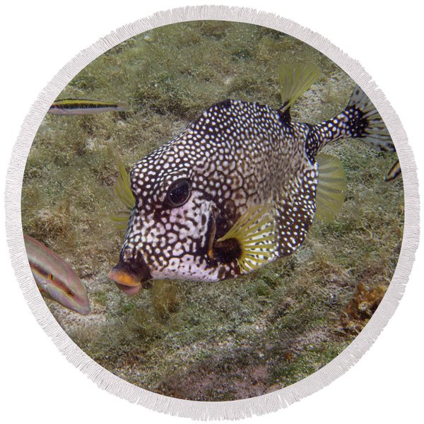 Spotted Trunkfish Round Beach Towel