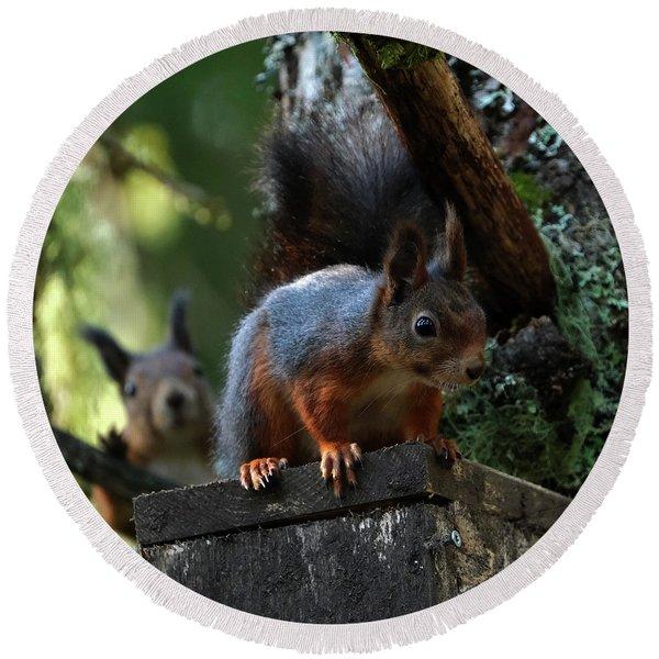 Squirrels Round Beach Towel