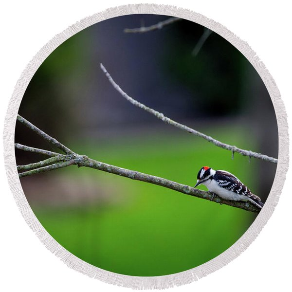 The Downey Woodpecker Round Beach Towel