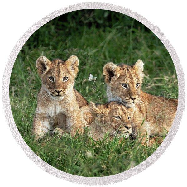 Three Cute Lion Cubs In Kenya Africa Grasslands Round Beach Towel