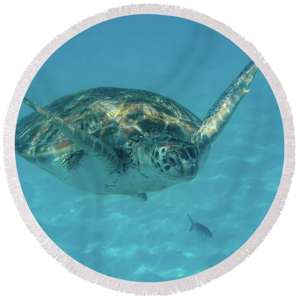 Turtle Approaching Round Beach Towel