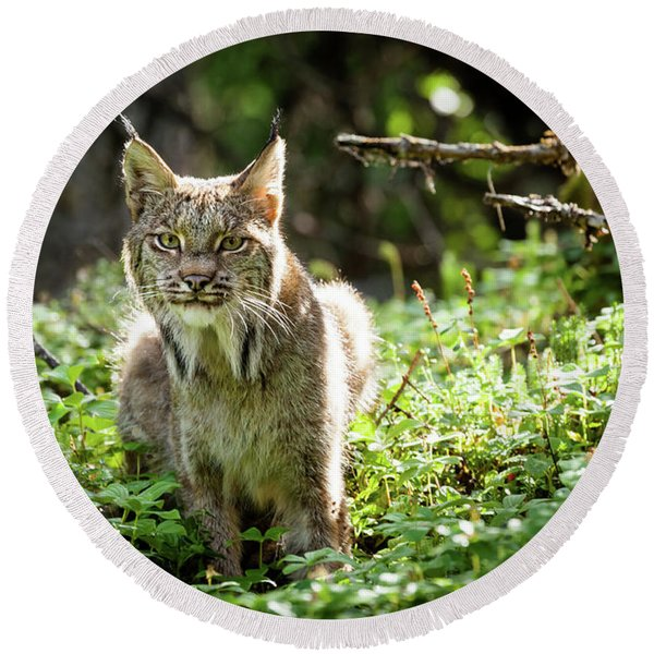 Round Beach Towel featuring the photograph Watchful Mama Lynx by Tim Newton