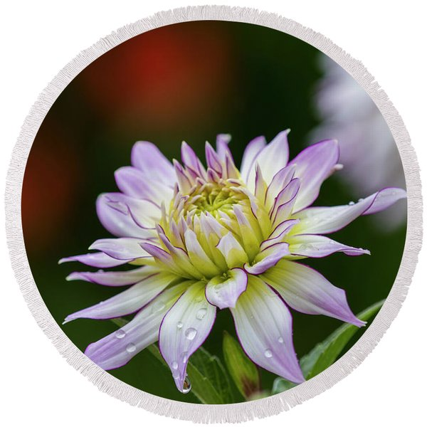 Wet Petals Dahlia Round Beach Towel