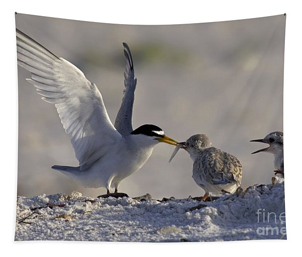 Least Tern Feeding It's Young Tapestry