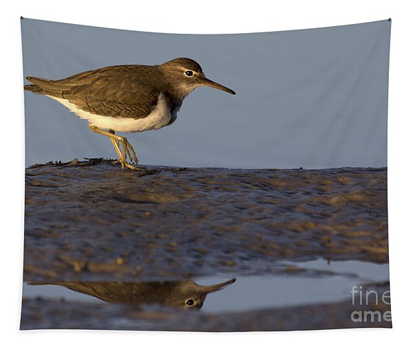 Spotted Sandpiper Reflection Tapestry