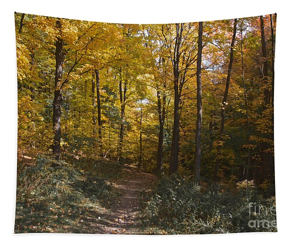 The Path Tapestry