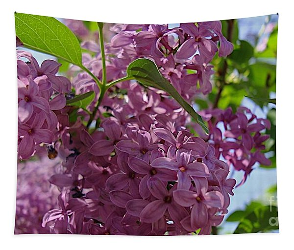 A Lovely Color Tapestry