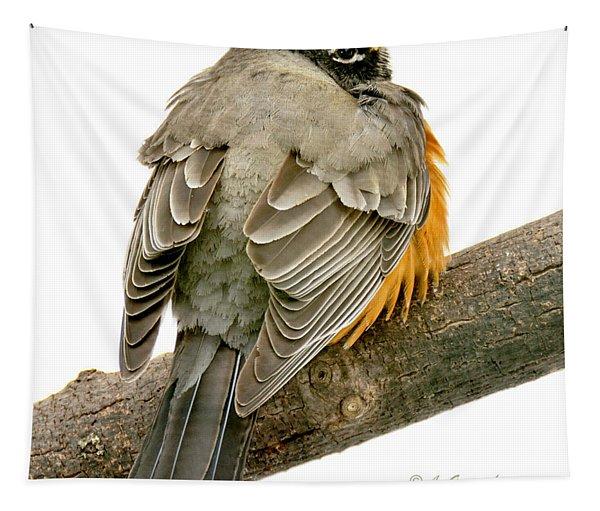 American Robin Male Animal Portrait Tapestry