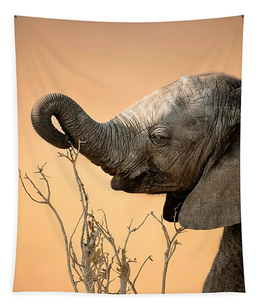 Baby Elephant Reaching For Branch Tapestry