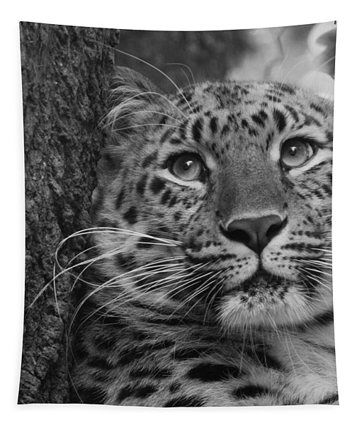 Black And White Amur Leopard Tapestry