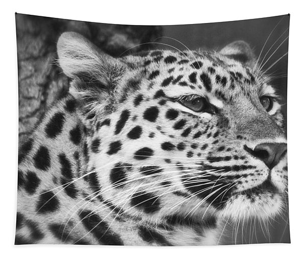 Black And White - Amur Leopard Portrait Tapestry