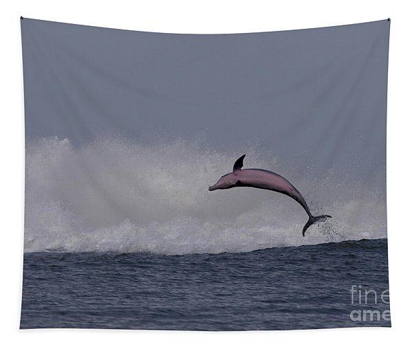 Bottlenose Dolphin Photo Tapestry