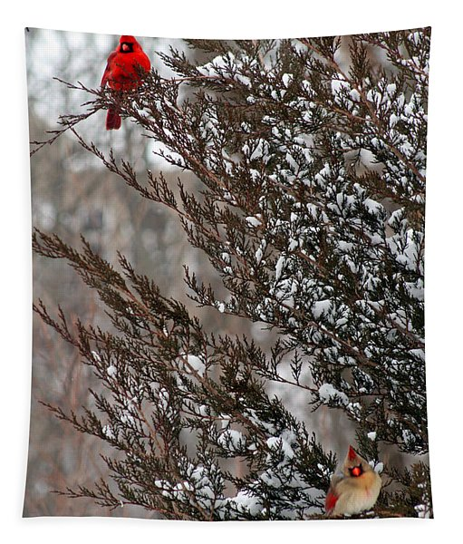 Cardinal Couple In Evergreen Tapestry