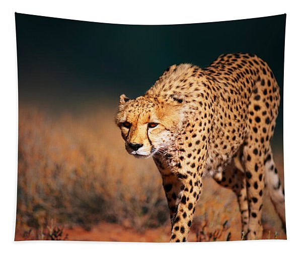 Cheetah Approaching From The Front Tapestry