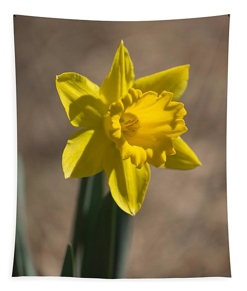 Daffodil In Early Spring Tapestry