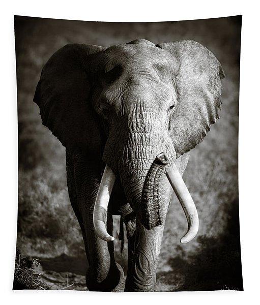 Elephant Bull Tapestry
