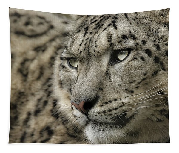 Eyes Of A Snow Leopard Tapestry