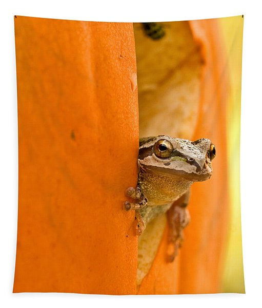 Halloween Surprise  Tapestry