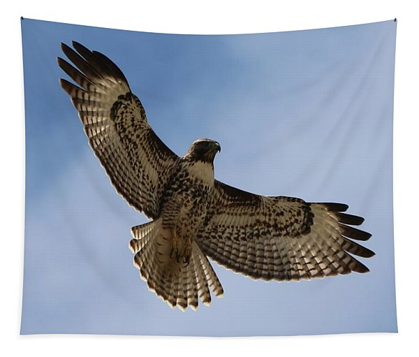Tapestry featuring the photograph Hawk In Flight  by Christy Pooschke