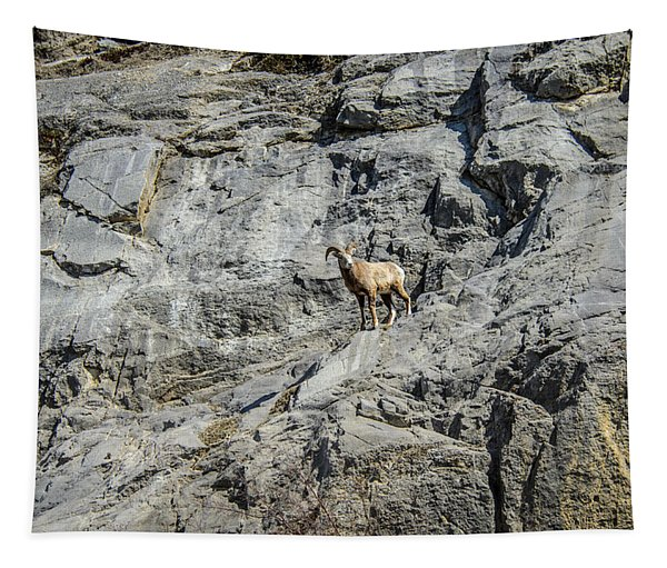 Big Horn Sheep Coming Down The Mountain  Tapestry