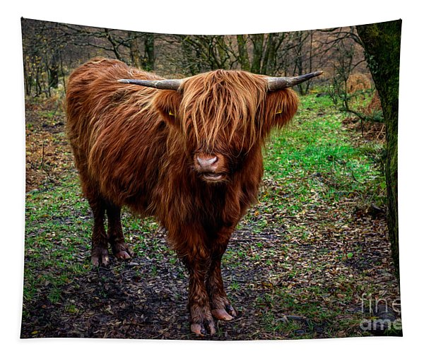 Highland Beast  Tapestry