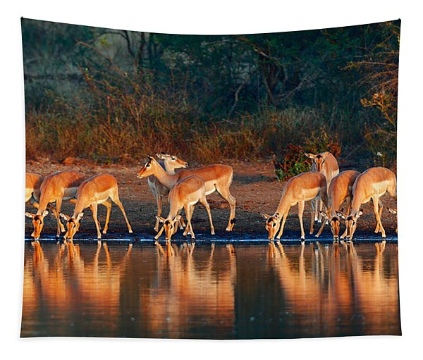 Impala Herd With Reflections In Water Tapestry