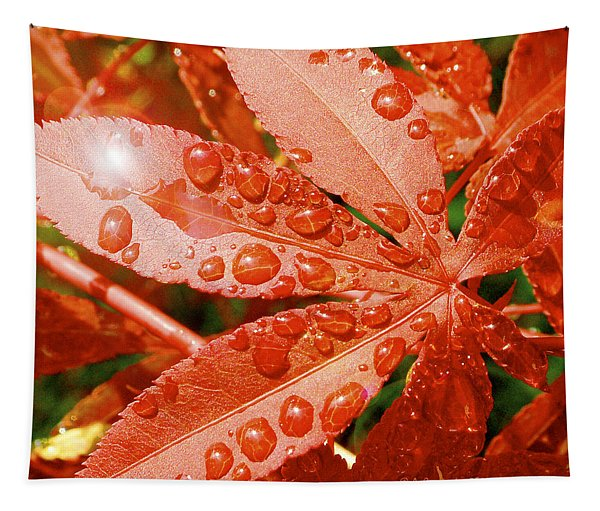 Japanese Maple Leaf With Rain Drops And Sunburst Tapestry