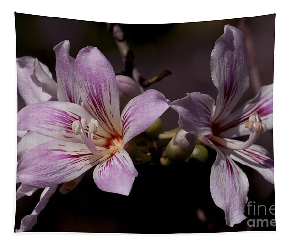 Kapok Bloom Tapestry
