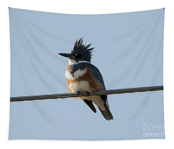 Kingfisher Profile Tapestry