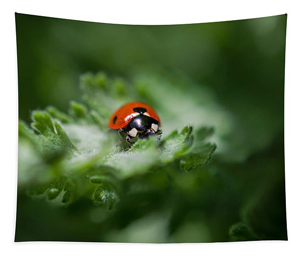Ladybug On The Move Tapestry
