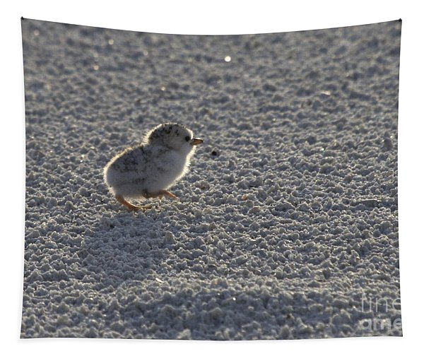 Least Tern Chick Tapestry