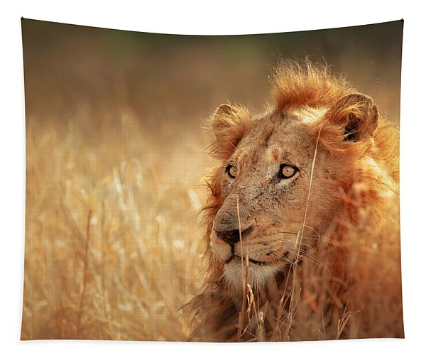 Lion In Grass Tapestry