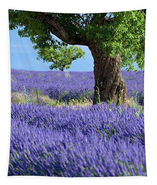 Lone Tree In Lavender Tapestry