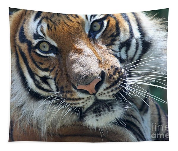 Malayan Tiger Tapestry