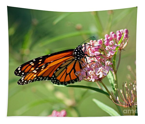 Monarch Butterfly On Milkweed Tapestry