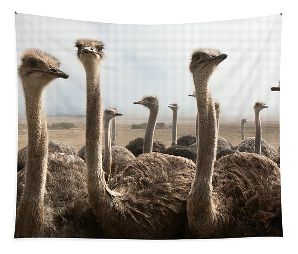 Ostrich Heads Tapestry