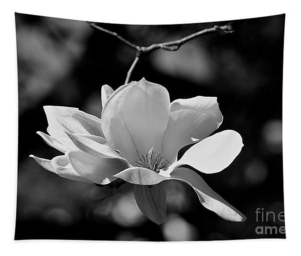 Perfect Bloom Magnolia In White Tapestry