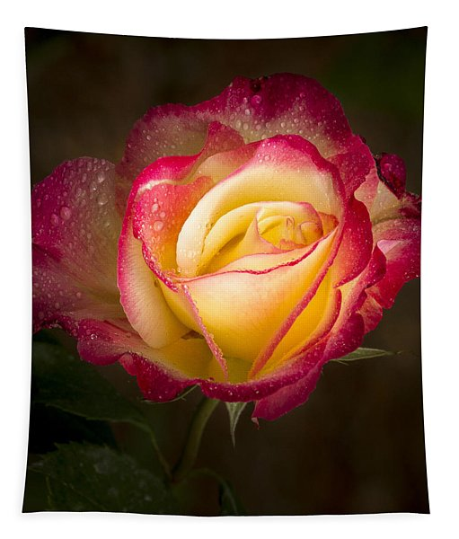 Portrait Of A Double Delight Rose Tapestry