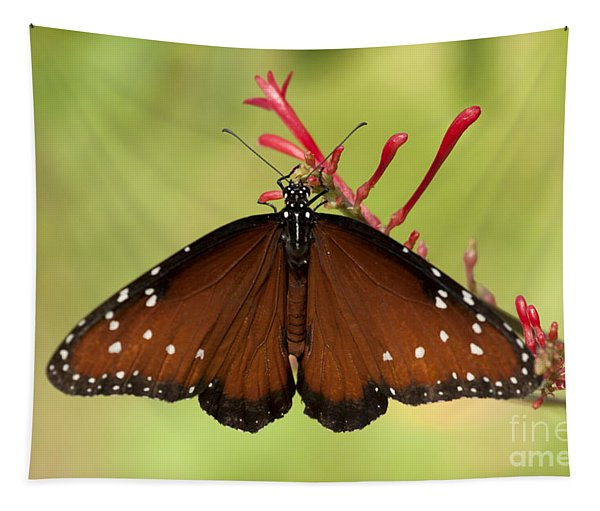 Queen Butterfly Tapestry